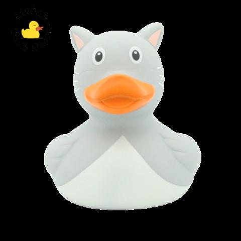 Grey Cat Duck