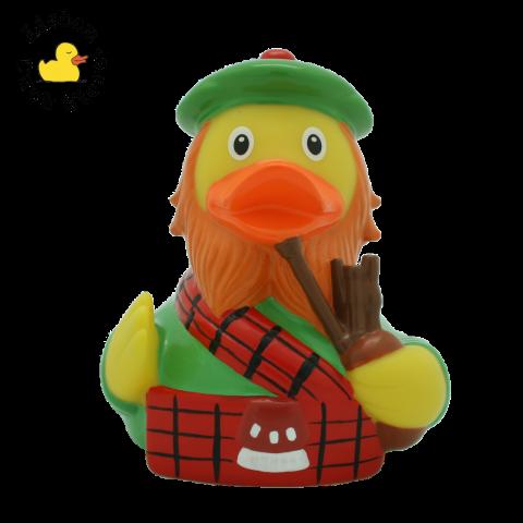 Scotsman Duck